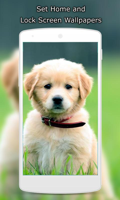 Cute Puppy Wallpapers For Android Apk Download