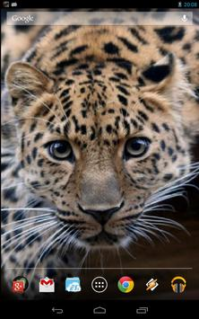 Magic Touch: Leopard Live Wallpaper poster