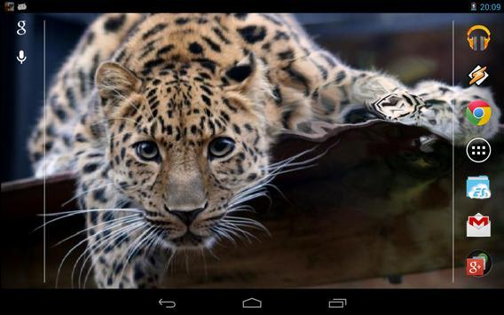 Magic Touch: Leopard Live Wallpaper screenshot 2
