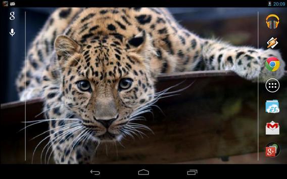 Magic Touch: Leopard Live Wallpaper screenshot 3