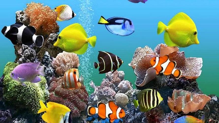 колебания обои для рабочего стола рыбки в аквариуме живые презентовать его можно