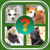 Угадай породу собак??? icon