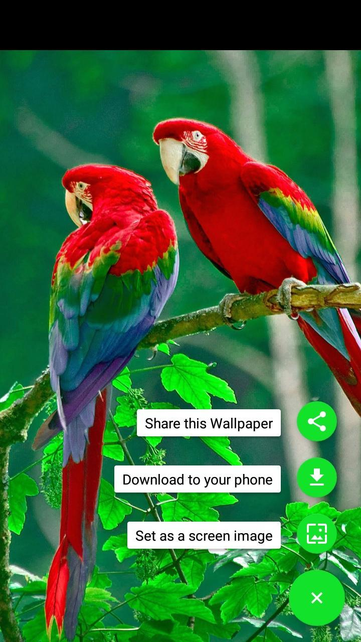 All Birds Wallpapers Hd For Android Apk Download