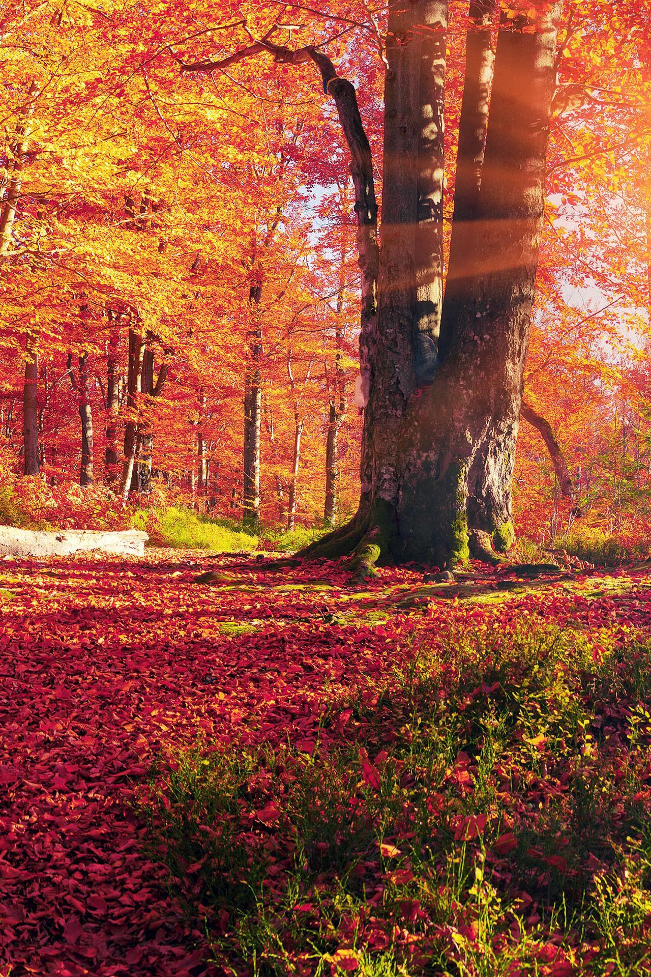 Autumn Wallpaper Hd Backgrounds Themes For Android Apk Download