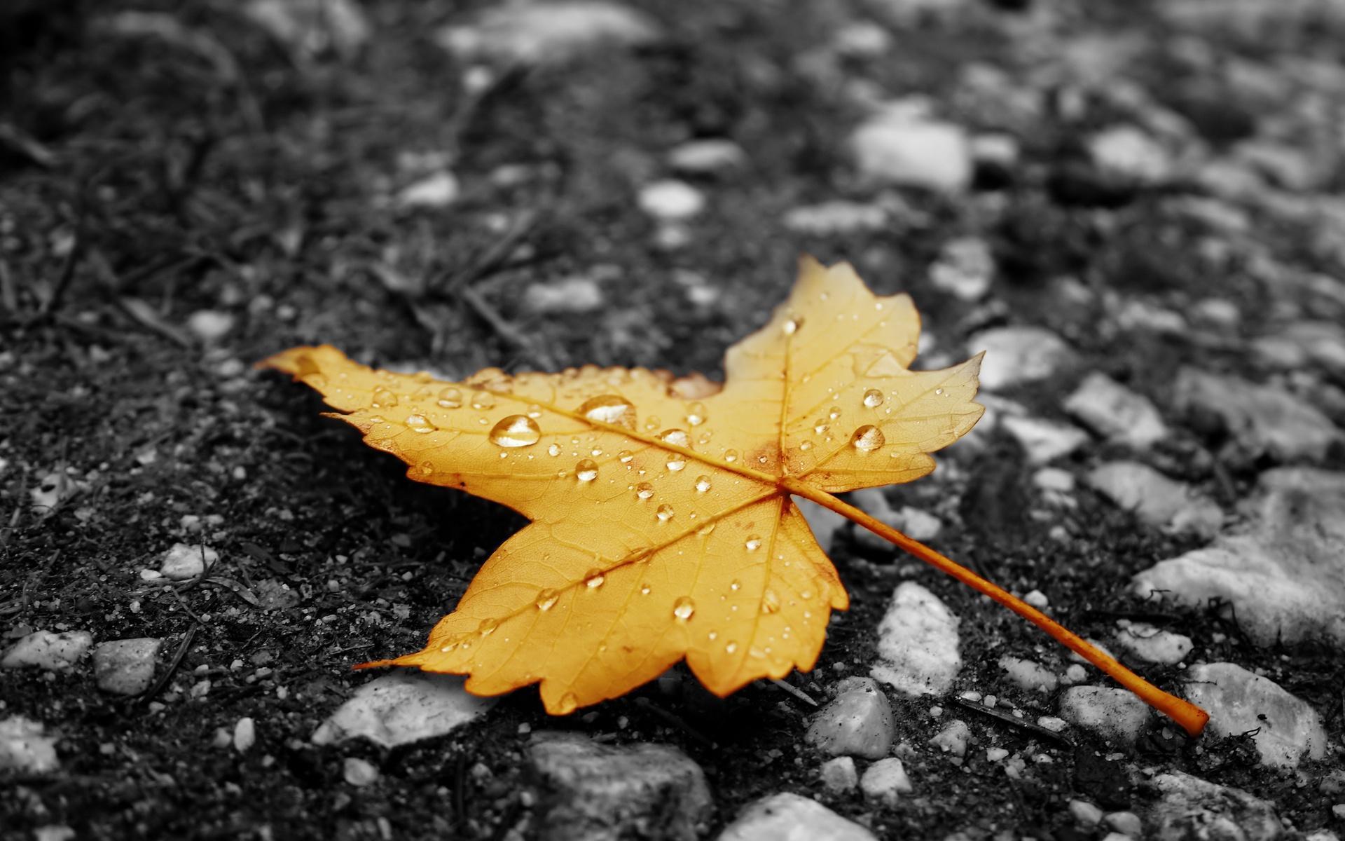 С дождем, – дождь скачать hd картинки | 1200x1920