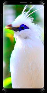 10000 Nature Wallpapers for Android - APK Download
