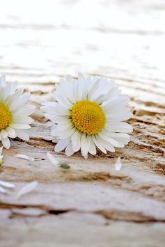 Daisy Wallpapers screenshot 2