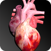 Circulatory System in 3D (Anatomy)-icoon