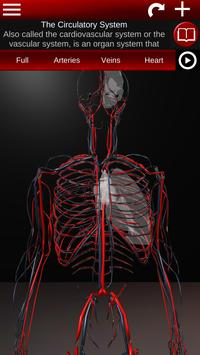 Circulatory System in 3D (Anatomy) poster