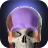 Anatomyka - 3D Human Anatomy Atlas icon