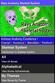 Rays Anatomy Skeletal System poster
