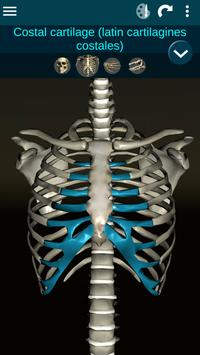 Osseous System in 3D (Anatomy) screenshot 5