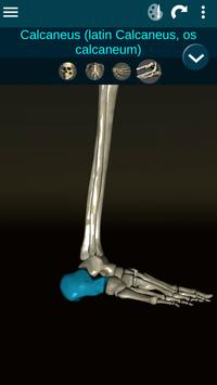 Osseous System in 3D (Anatomy) screenshot 6