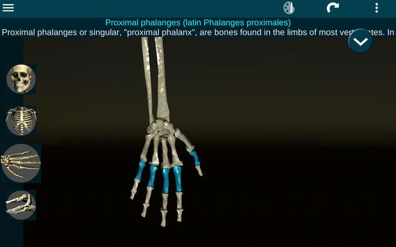 Osseous System in 3D (Anatomy) screenshot 10