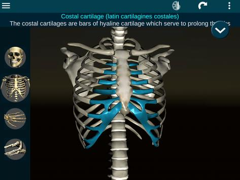 Osseous System in 3D (Anatomy) screenshot 17