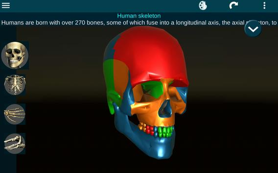 Osseous System in 3D (Anatomy) screenshot 15