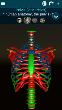 Osseous System in 3D (Anatomy) screenshot 1