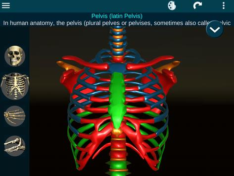 Osseous System in 3D (Anatomy) screenshot 20