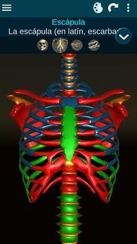 Sistema Oseo en 3D (anatomía) captura de pantalla 7