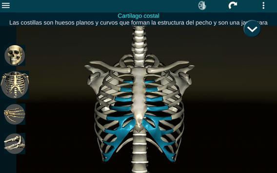 Sistema Oseo en 3D (anatomía) captura de pantalla 9