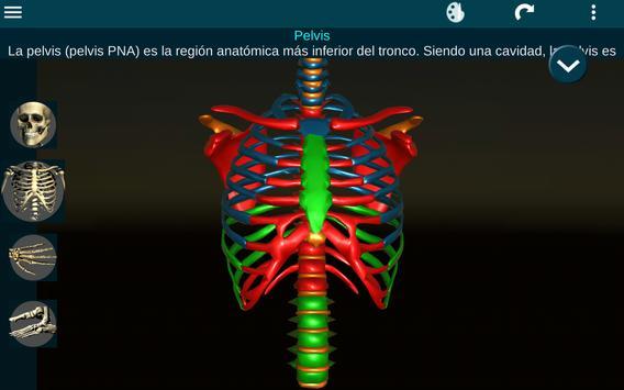 Sistema Oseo en 3D (anatomía) captura de pantalla 11