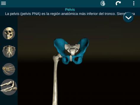 Sistema Oseo en 3D (anatomía) captura de pantalla 21