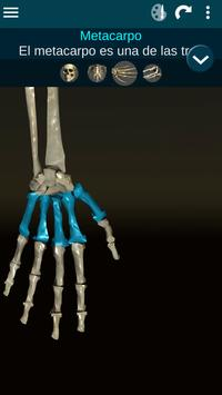 Sistema Oseo en 3D (anatomía) captura de pantalla 2