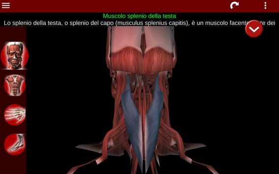 15 Schermata Sistema Muscolare in 3D (Anatomia).