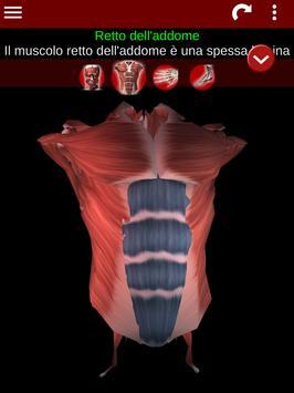 18 Schermata Sistema Muscolare in 3D (Anatomia).