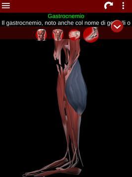 20 Schermata Sistema Muscolare in 3D (Anatomia).