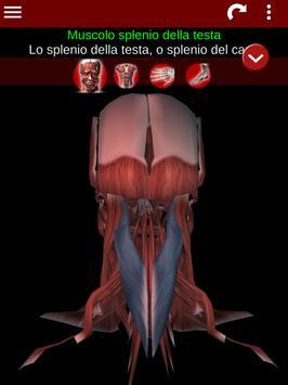 23 Schermata Sistema Muscolare in 3D (Anatomia).