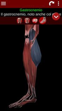 3 Schermata Sistema Muscolare in 3D (Anatomia).