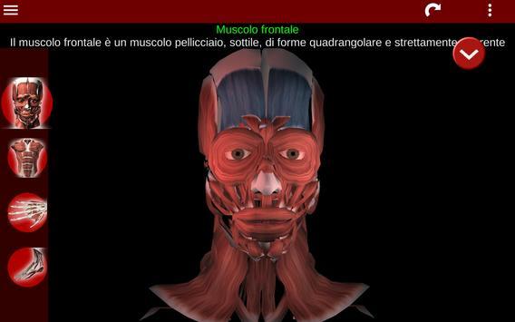 8 Schermata Sistema Muscolare in 3D (Anatomia).