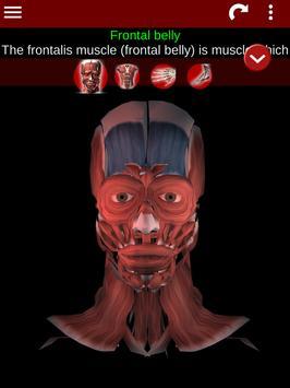 Muscular System 3D (anatomy) Ekran Görüntüsü 16