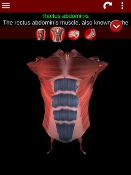 Muscular System 3D (anatomy) Ekran Görüntüsü 17