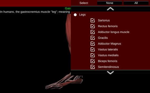 Muscular System 3D (anatomy) Ekran Görüntüsü 12