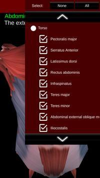 Muscular System 3D (anatomy) Ekran Görüntüsü 4