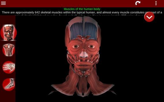 Muscular System 3D (anatomy) Ekran Görüntüsü 8