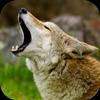 Coyote Sounds иконка
