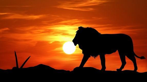 Lion King Wallpaper Hd For Android Apk Download
