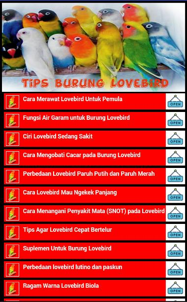 Tips Burung Lovebird For Android Apk Download