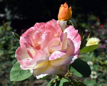 꽃 스크린샷 12