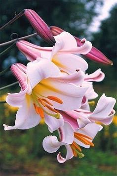꽃 스크린샷 7