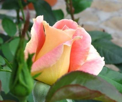 꽃 스크린샷 4