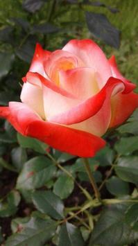꽃 스크린샷 5