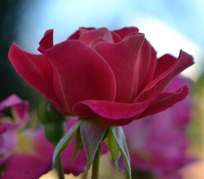 꽃 스크린샷 9