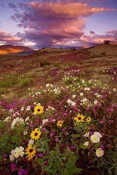 Natural landscapes poster