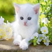 Kittens icon