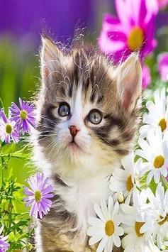 Kittens screenshot 7