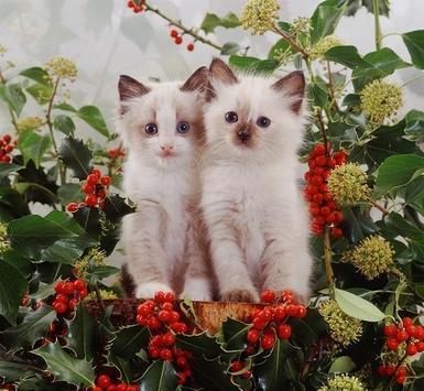 Kittens screenshot 2